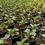 Prihrana biljki kvalitetnim gnojivima