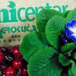 Valentinovo u poslovnicama Agro-kuće
