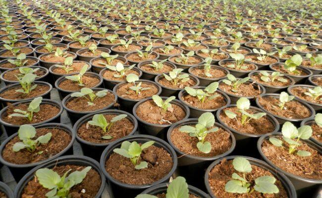 Proizvodimo biljke u Agro-kući
