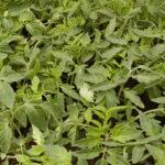 Gnojidba usjeva i nasada – povećajte prinose