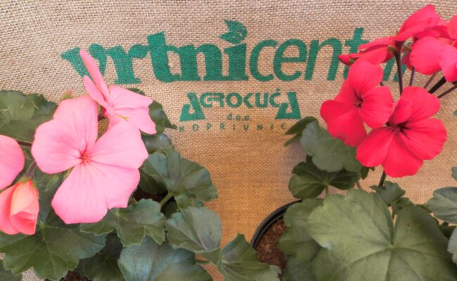 Prodaja ljetnica, presadnica povrća i začinskog bilja
