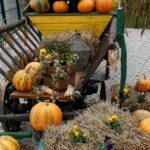 Niske cijene na jesenskim danima Agro-kuće